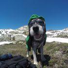 Der moderne Wanderhund trägt Brille und Sonnenschutz! :-)