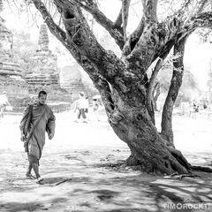 Der Mönch und der Baum