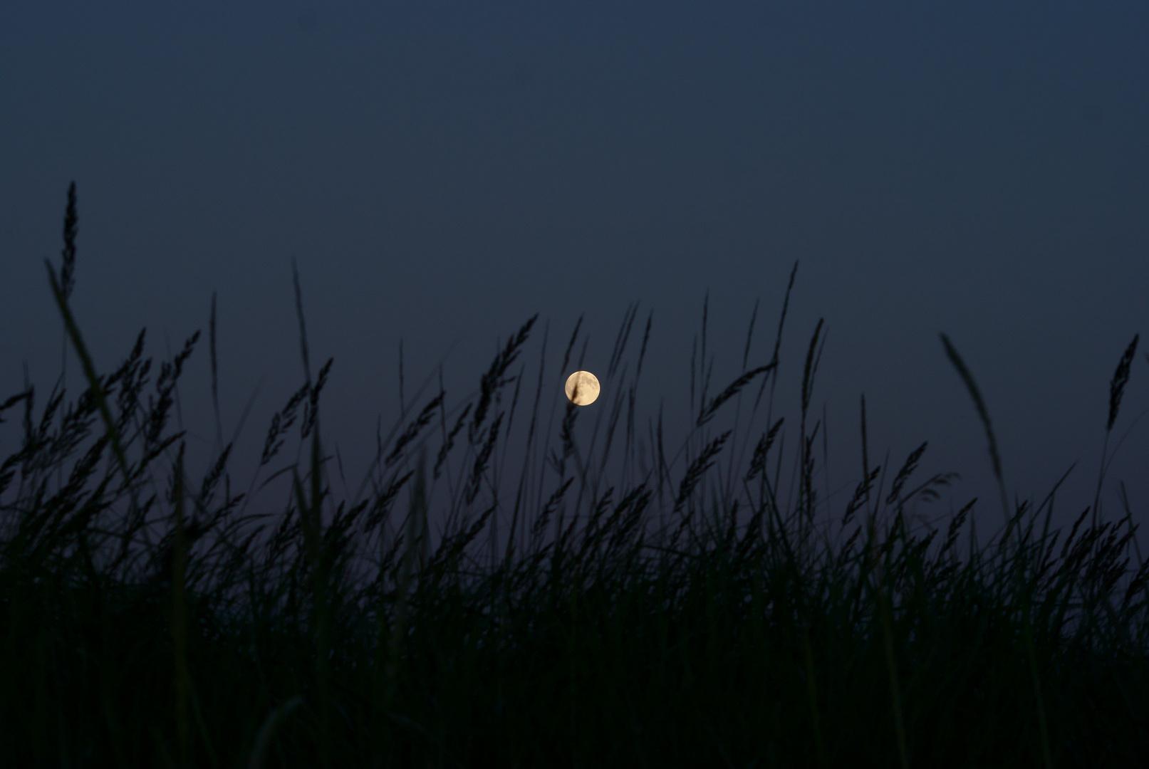 Der Mond über den Dünen bei Haffkrug