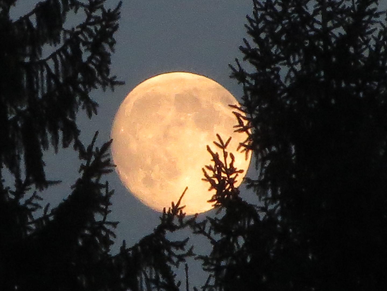Der Mond über Tiroler Tannen