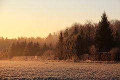 Der Morgen