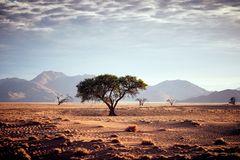Der Morgen am Rande der Namib