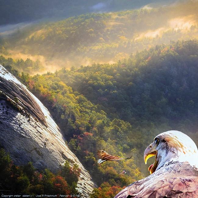 Der Morgen mit Adlern
