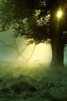 Der mystische Baum
