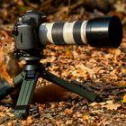Der Nachwuchsfotograf