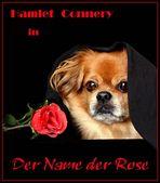 """DER NAME DER ROSE"" mit Hamlet Connery"