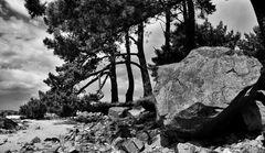 Der nasse Stein