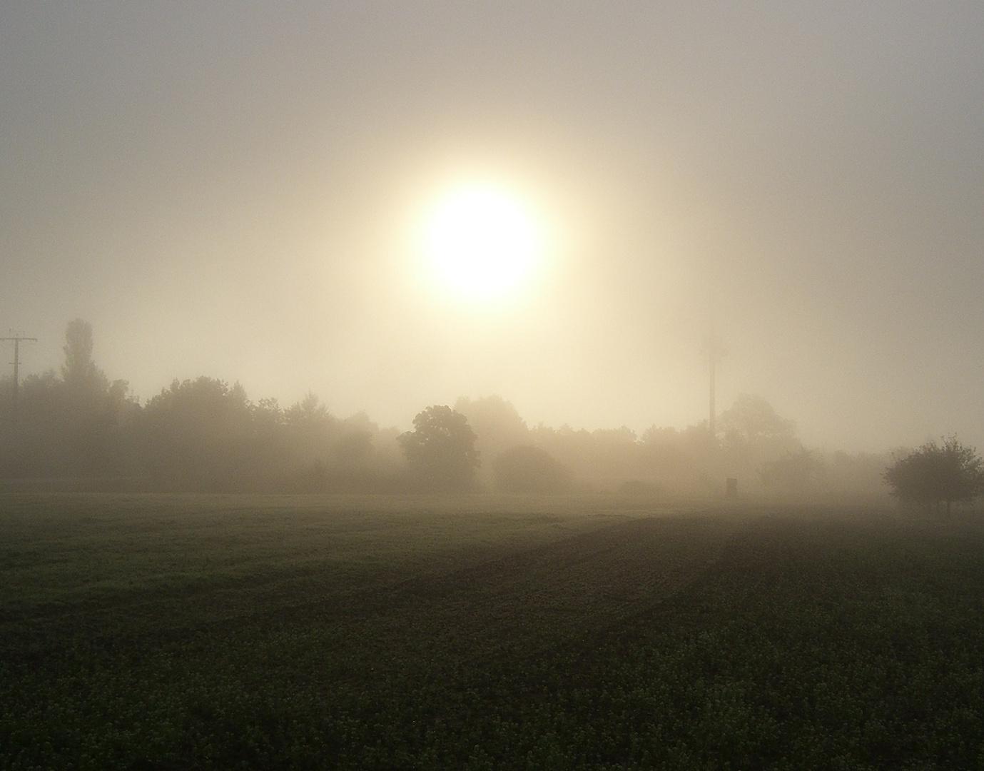 Der Nebel.....