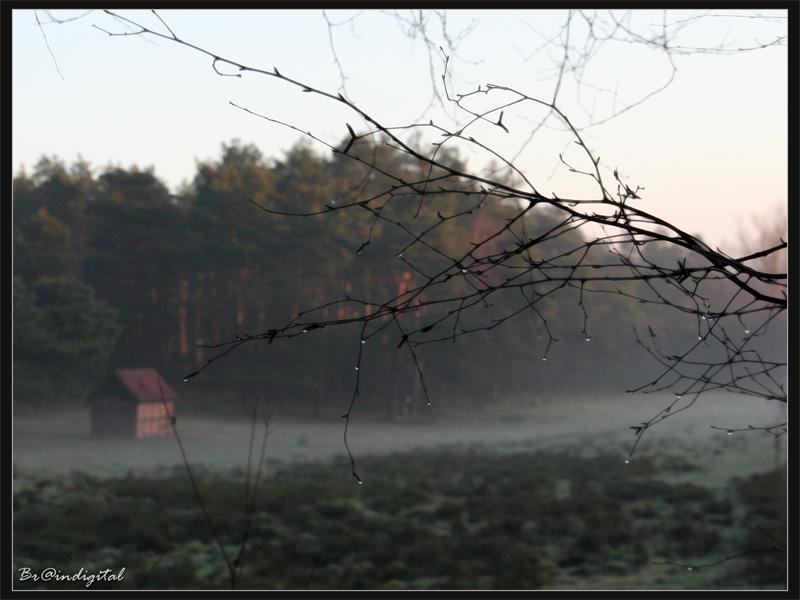 Der Nebel geht...