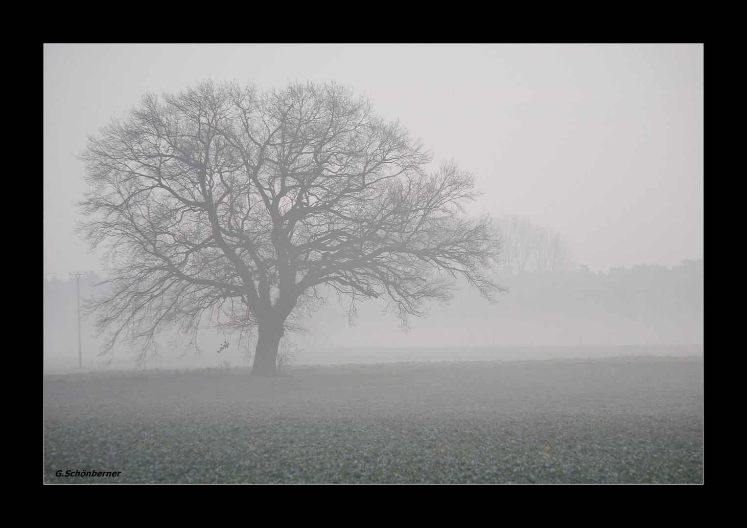 Der Nebel im Herbst !
