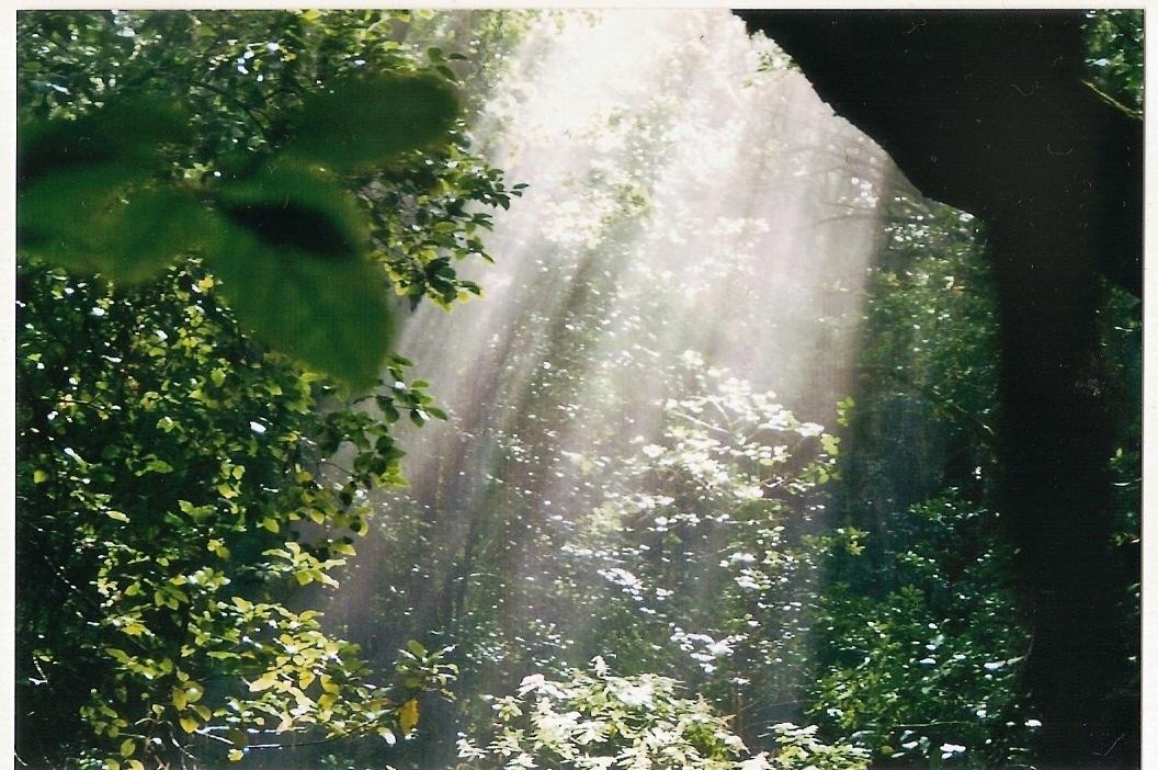 Der Nebel im Lorbeerwald
