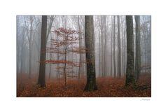 Der Nebel löst sich nur langsam auf