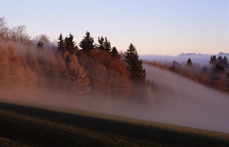 Der Nebel nimmt dne Wald in die Zange