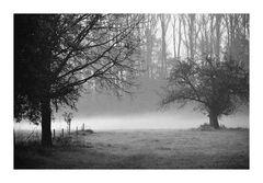Der Nebel steigt,es fällt das Laub