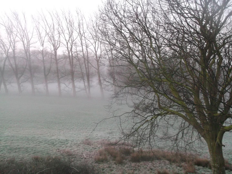 Der Nebel vom Morgen in Taarstedt