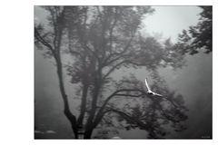 Der Nebelgleiter