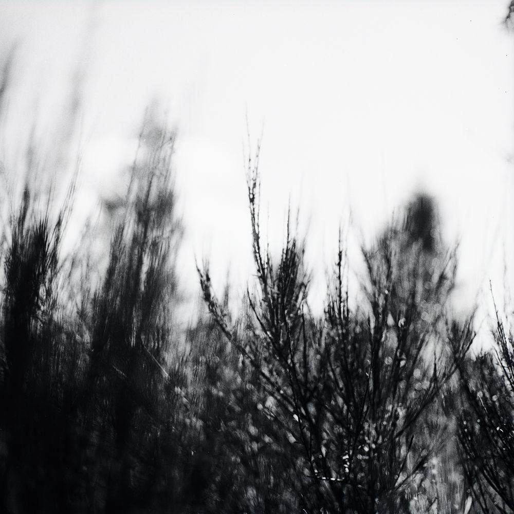 Der Nebelkamm