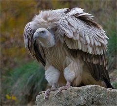 Der neue bayerische Wappenvogel???