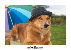 Der neue Hut