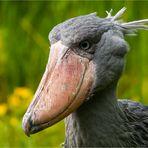 … Der neue Wappenvogel der Niederlande …