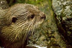 der neugierige Otter
