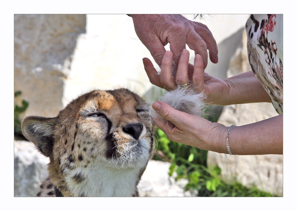 der neuste Schrei: die Gepardenhaar- Matratze !