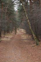 Der nichtszeigende Waldweg.