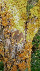 Der Nierenfleck wünscht allen fc-Freunden trotz guter Tarnung einen wunderschönen Herbstsonntag!