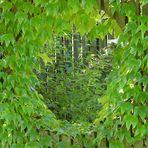 Der noch grüne Durchblick