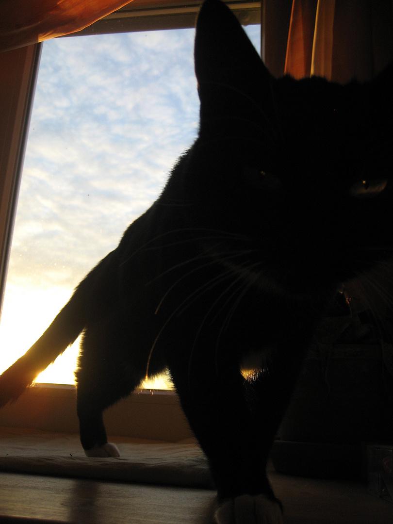 Der Panther...