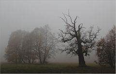 Der Park im Nebel