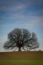 Der perfekte Baum.