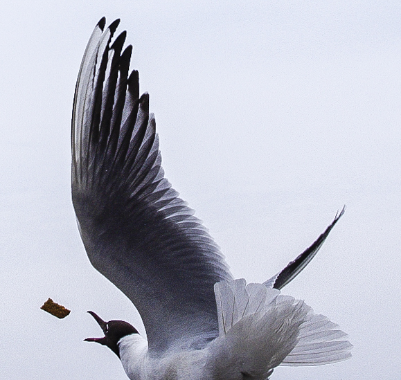 Der perfekte Flügelschlag für den Brotbrocken