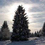 Der perfekte Weihnachtsbaum.