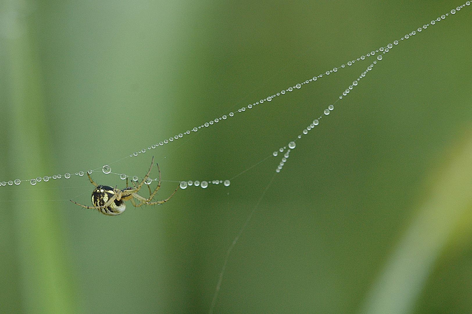 Der Perlenwanderer