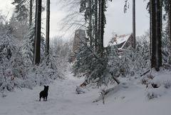 Der Pfad auf den Weißen Stein (Odenwald)