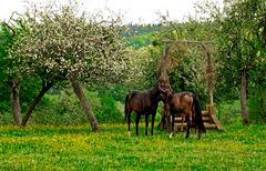 Der Pferdefrühling ...