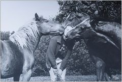 Der Pferdekuss