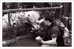 -- Der Pferdepflüsterer --