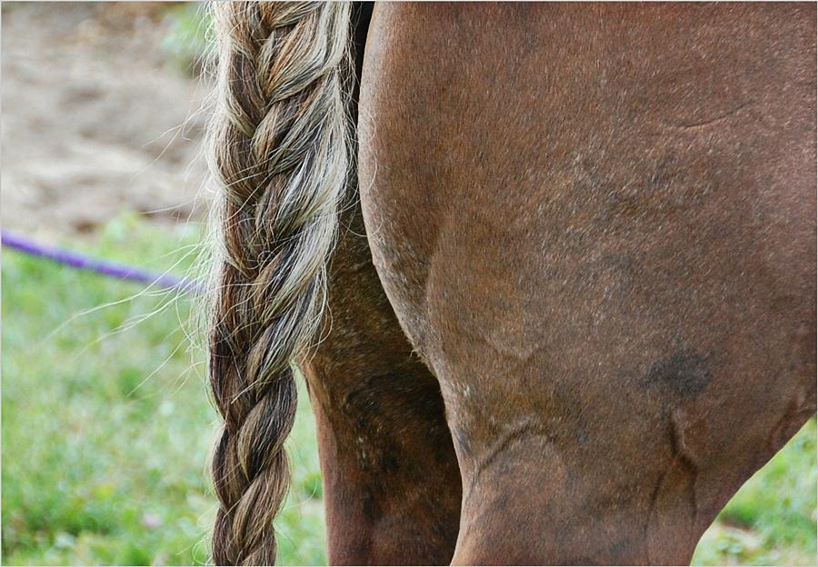 der Pferdeschwanz