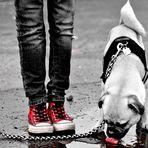 Der Pfützenhund