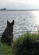Der philosphierende Hund