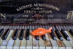 Der Pianist...