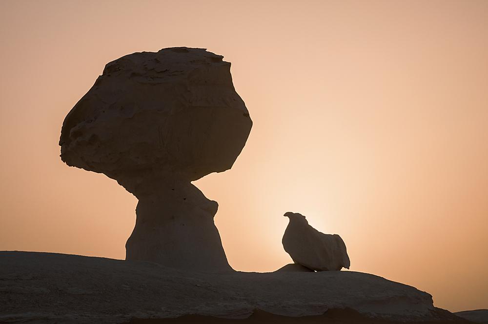 der Pilz und das Huhn