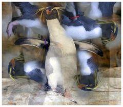 der Pinguintanz