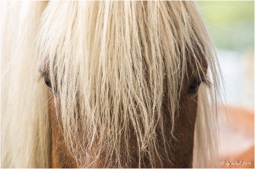 der Pony vom Pony