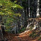 Der Postreiterweg im Heiligenstädter Wald
