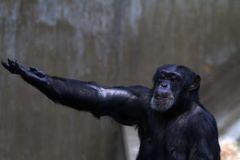 Der Primat