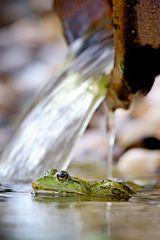 Der Prinz bleibt lieber Frosch