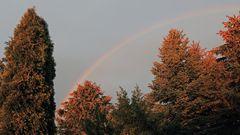 Der Regenbogen über den Bäumen bei mehr Licht von hinten...